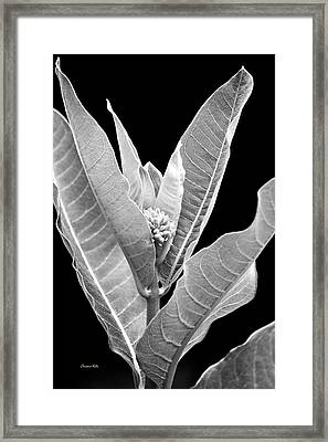 Framed Print featuring the photograph Milkweed Black And White by Christina Rollo