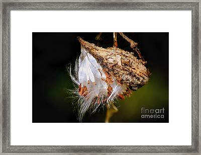 Framed Print featuring the photograph Milkweed by Brenda Bostic