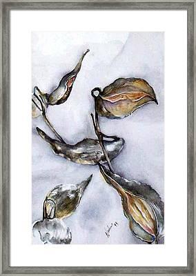Milkweed In Winter Framed Print