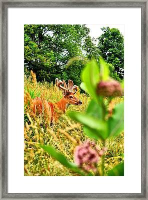 Milkweed Monster Framed Print