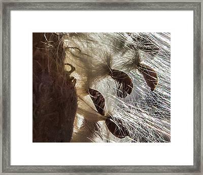 Milkweed Seed Burst Framed Print
