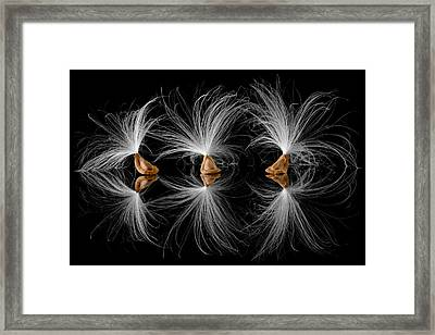 Milkweed Seeds Framed Print