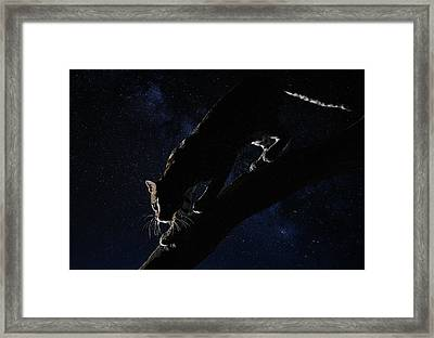 Framed Print featuring the photograph Milky Way Ocelot by Wade Aiken