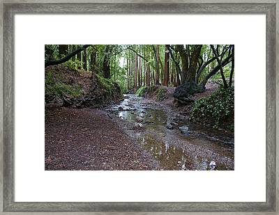Framed Print featuring the photograph Miller Grove by Ben Upham III