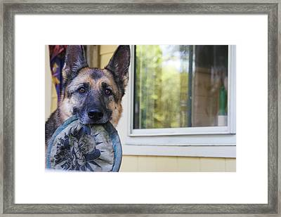 Framed Print featuring the photograph Millie by Lois Lepisto