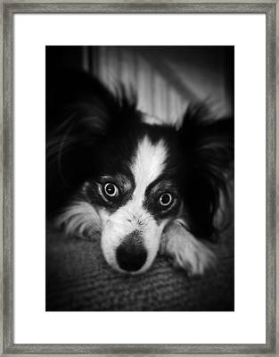 Millie Framed Print
