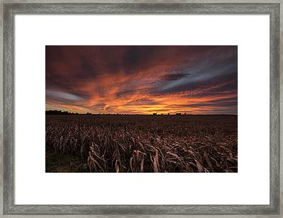 Milo Harvest Sunset Framed Print by Chris Harris