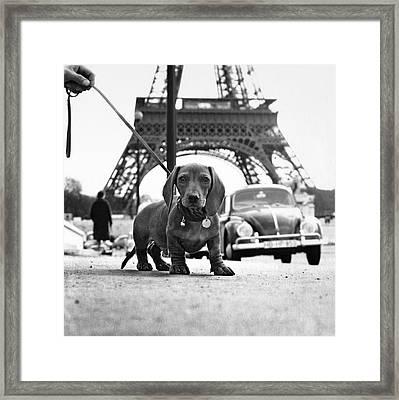 Milo Mon Chien Framed Print by Hans Mauli