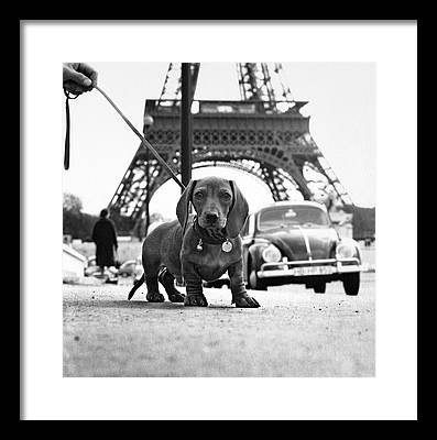 Dachshund Framed Prints