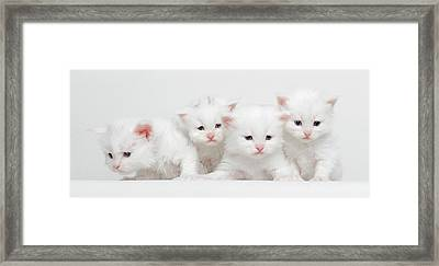 Milky Collection Framed Print