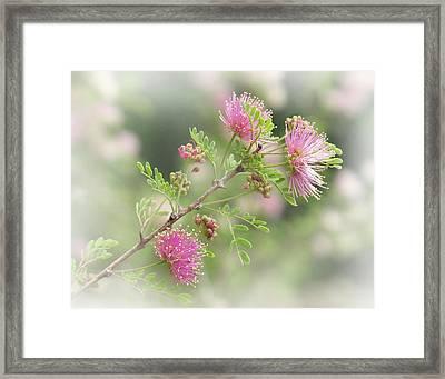 Mimosa Framed Print by David and Carol Kelly
