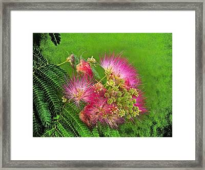 Mimosa II Framed Print by James Granberry
