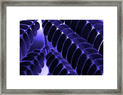 Mimosa Leaf Abstract 2 Framed Print by Mike Eingle