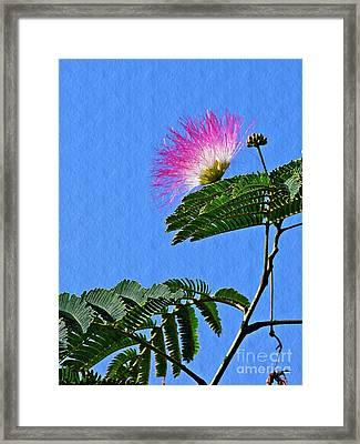 Mimosa Framed Print by Sarah Loft