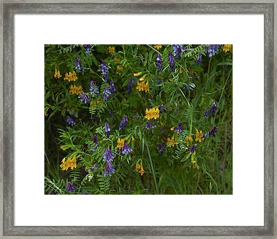 Mimulus And Vetch Framed Print by Doug Herr