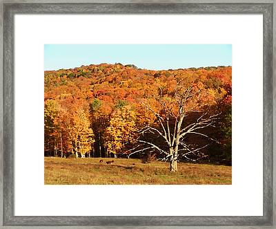 Minard Farms Framed Print