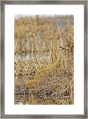 Minding The Nest 2 Framed Print by Natural Focal Point Photography