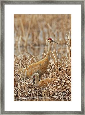 Minding The Nest Framed Print by Natural Focal Point Photography