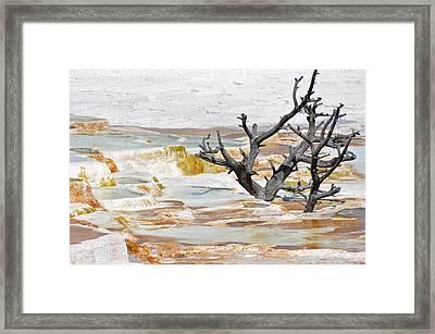 Mineralized Tree Framed Print
