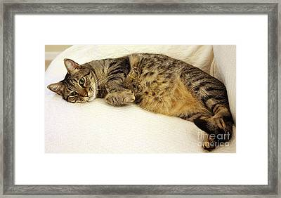 Ming Resting On The Couch Framed Print