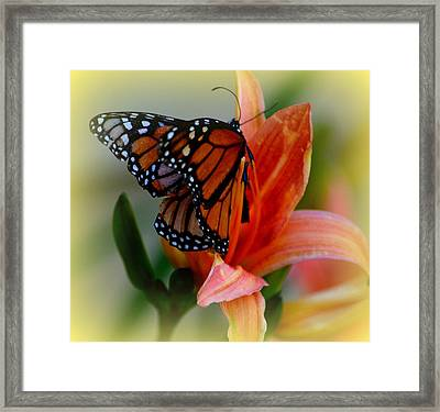 Mingle With A Monarch Framed Print
