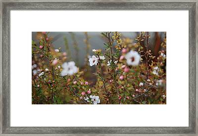 Mingling Flowers Framed Print by Jean Booth