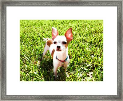 Mini Dog Framed Print