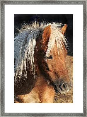 Mini Horse Portrait Two Framed Print by Laurie With