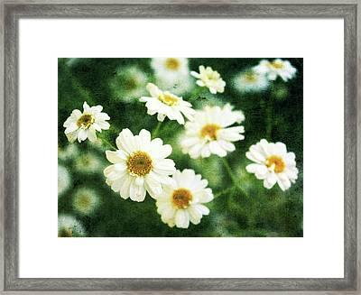 Mini Spring Daisy's Framed Print by Cathie Tyler
