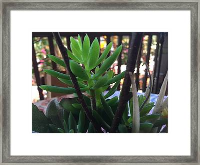 Mini Succulent  Framed Print by Russell Keating
