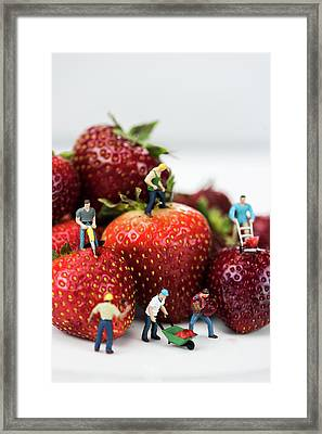 Miniature Construction Workers On Strawberries Framed Print