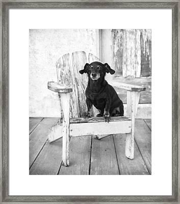 Mini Dachshund Dog Sitting On An Adirondack Chair Framed Print