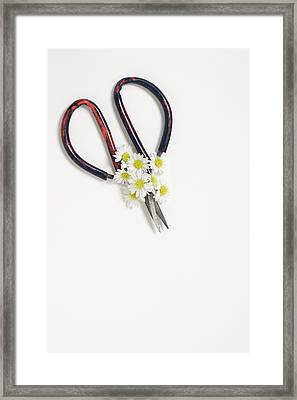 Miniature Daisies And Vintage Scissors Framed Print