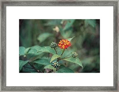 Miniature Framed Print by David Cardona