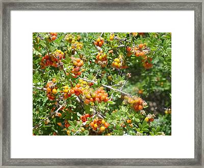 Miniature Fruit Balls Framed Print