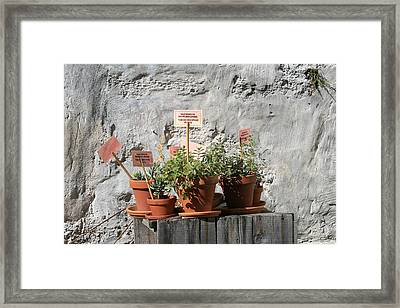 Framed Print featuring the photograph Miniature Plants For Sale by Shirin Shahram Badie