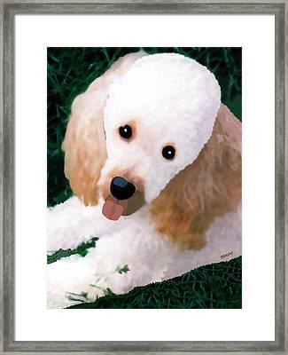 Miniature Poodle Albie Framed Print