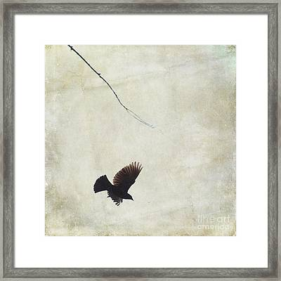 Framed Print featuring the photograph Minimalistic Bird In Flight  by Aimelle