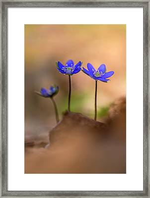 Framed Print featuring the photograph Minimalistic Impresion With Liverworts by Jaroslaw Blaminsky