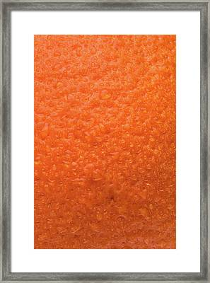 Minneola Skin Framed Print
