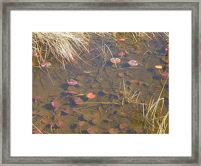 Minnows Framed Print