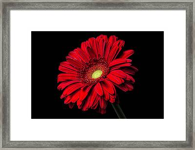 Minor Imperfections Framed Print by Zev Steinhardt
