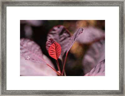 Miracles Happen Framed Print by Connie Handscomb