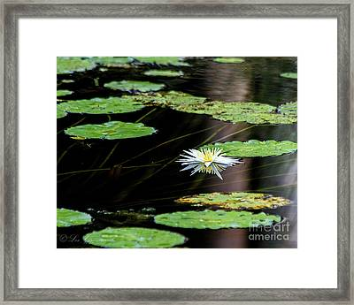 Mirror Lily Framed Print