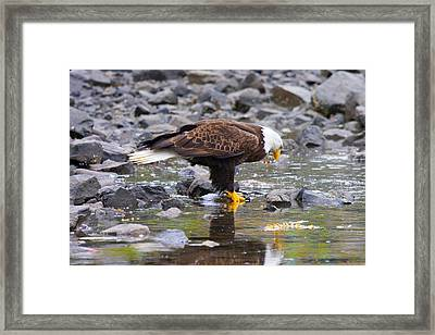 Mirror Mirror Framed Print by Mike  Dawson