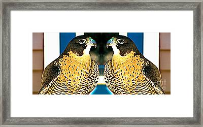 Mirrored Bird Series Peregrine Falcons Expressionist Effect Framed Print