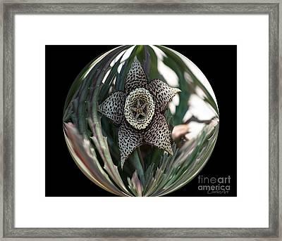 Captured Five-point Star Succulent Framed Print