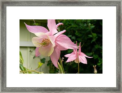 Framed Print featuring the photograph Mirrored Image by Pamela Patch