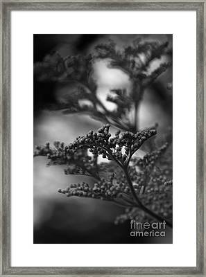 Mirrored In Sterling Framed Print by Linda Shafer