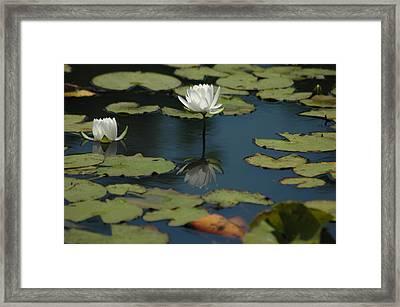 Mirrored Reflections 2 Framed Print by Devane Mattoni
